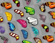 Бабочка Куодай